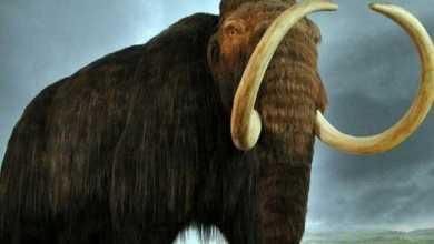 Photo of تفسير حلم الفيل في المنام