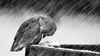 Photo of دعاء المطر
