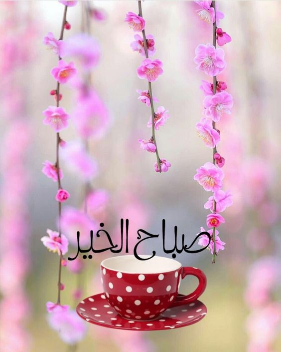 اجمل حالات واتس اب رومانسية 2019 حبيبي صباح الخير Youtube