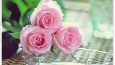 Photo of أجدد صور ورد , أحلى أشكال الورود
