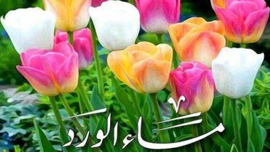 Photo of صور مساء الخير , بطاقات معبره عن مساء الورد