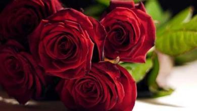 Photo of أجمل صور ورد رومانسية , صور ورود تصلح خلفيات رومانسية