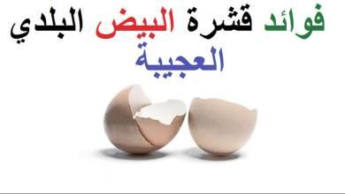Photo of فوائد قشر البيض للعظام , فوائد قشر البيض للبشرة والشعر
