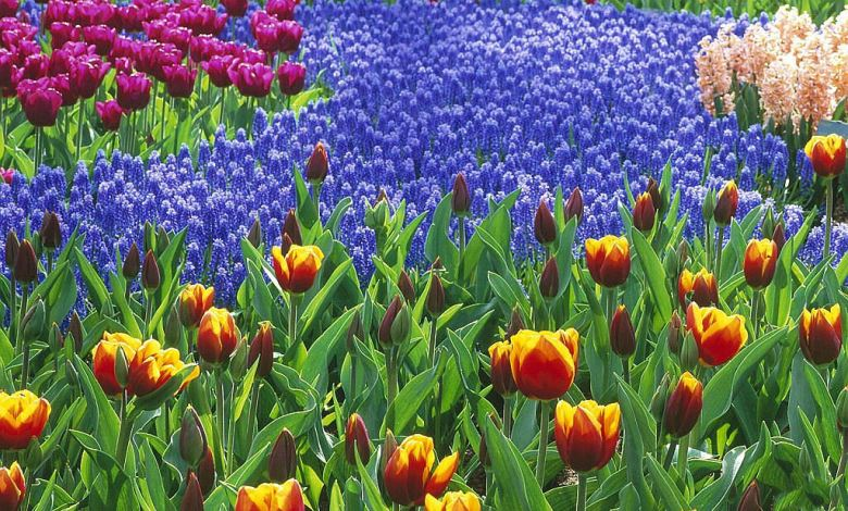 Photo of صور اجمل زهور , افضل خلفيات ورود