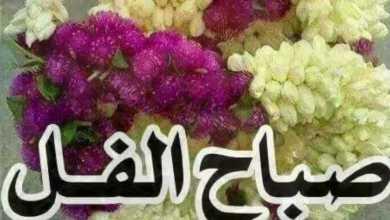 Photo of صور صباح الفل , صور رسايل صباحية جديدة
