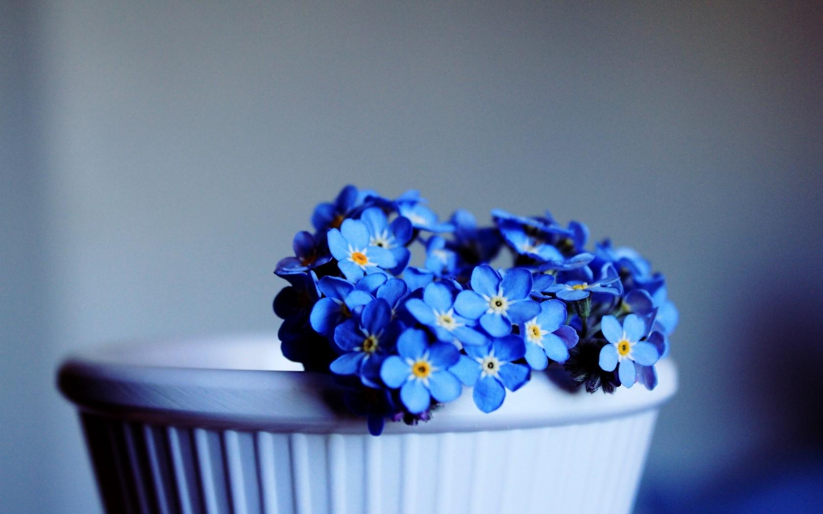 أرق خلفيات زهور زرقاء