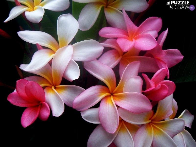 خلفيات الزهور باجمل الوان