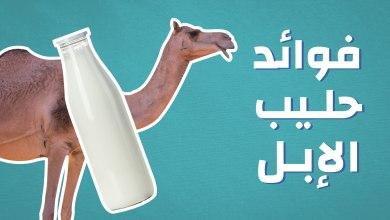 Photo of 11 فائدة من أهم فوائد حليب الإبل الصحية والجمالية