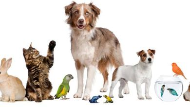 Photo of معلومات عن القطط والحيوانات الأليفة