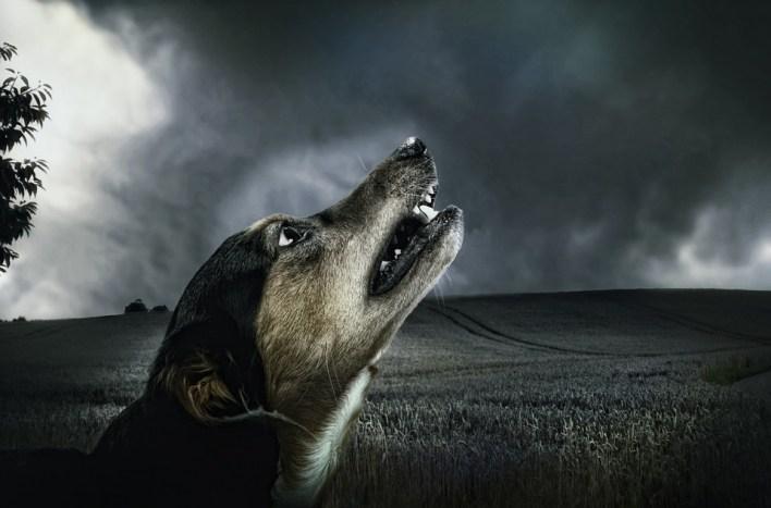 تفسير حلم الكلب الاسود .