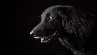 Photo of تفسير حلم الكلب الأسود في المنام للمرأة