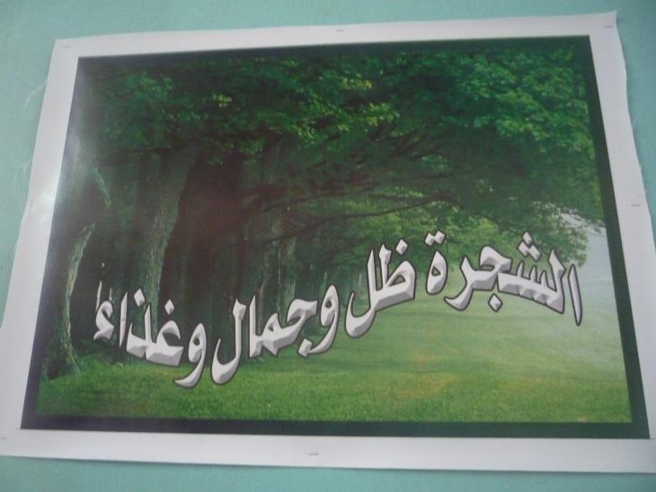 الشجرة في السعودية