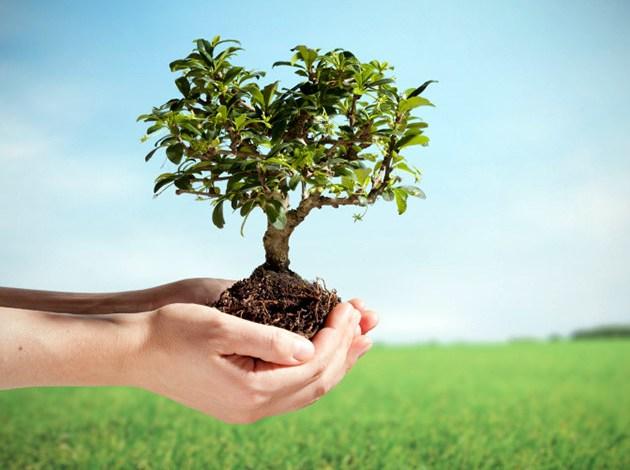 Photo of اهم 6 معلومات عن اسبوع الشجرة في المملكة العربية السعودية