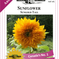sunflower sungold tall