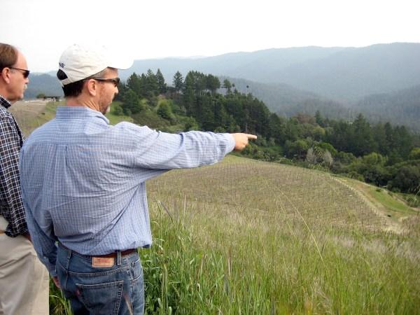 Kevin Harvey surveying one of Rhys's Santa Cruz Mountains vineyards