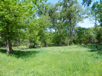 Spring grasses and Cottonwoods along Indian Creek