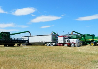 Offloading wheat into the truck.