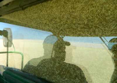 Looking through the combine's window into wheat bin