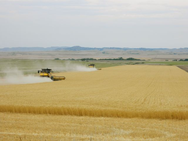 Wheat harvesters in Western Nebraska