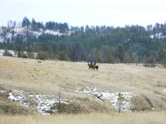 Local ranchers bringing in their cattle down from the National Forest.