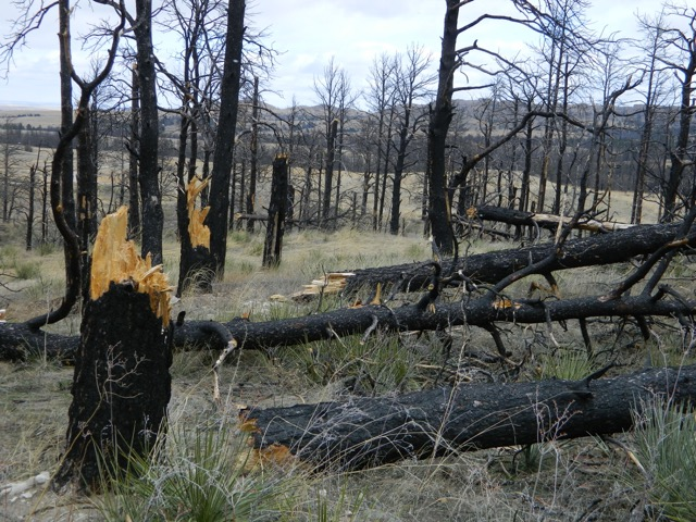 Sure footing and a watchful eye will keep our hikers safe among the littered forest floor. Tree trunks splintered as high winds ripped through the county.