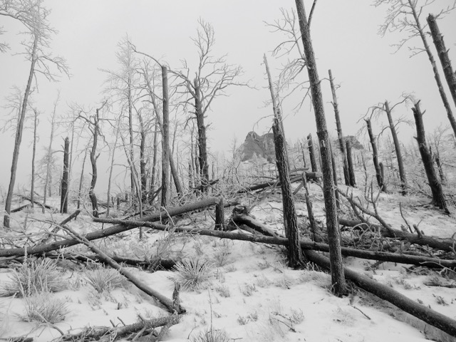 Tree damage. Sleet; then snow, followed with 60 mph winds lay these burned snags down like matchsticks.