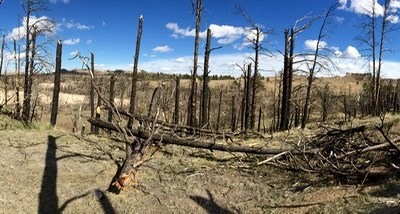 Panorama: Hiking along the Ponderosa Pine Ridge with sandstone buttes on the horizon.