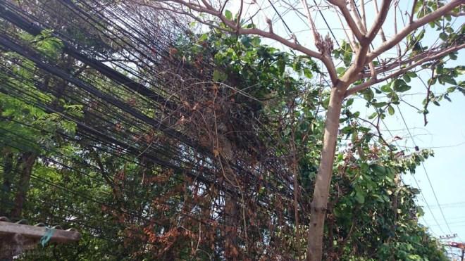 Strom auf Koh Samui: Der Baum als Isolator