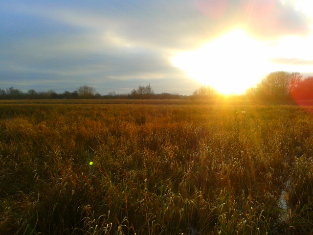 Sunset over the Meadows