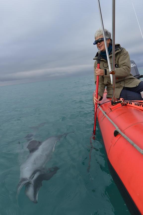 Professor Liz Slooten using an underwater pole-cam to study dolphins.