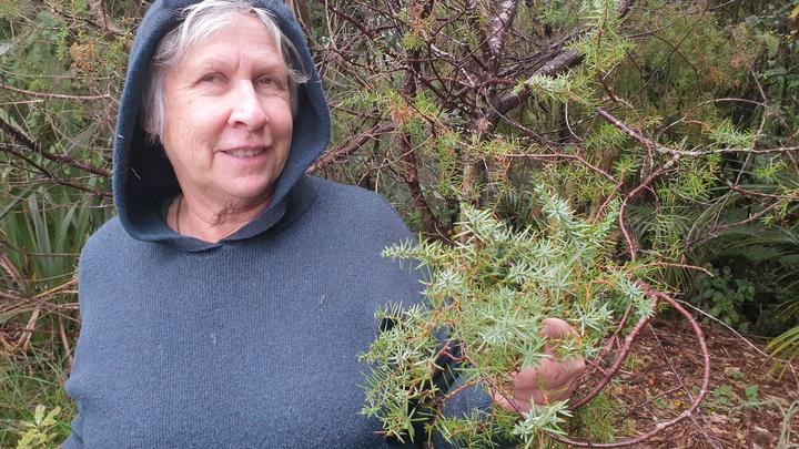 Marlene Busby with the juniper tree she planted in her Egmont Village garden 30 years ago.
