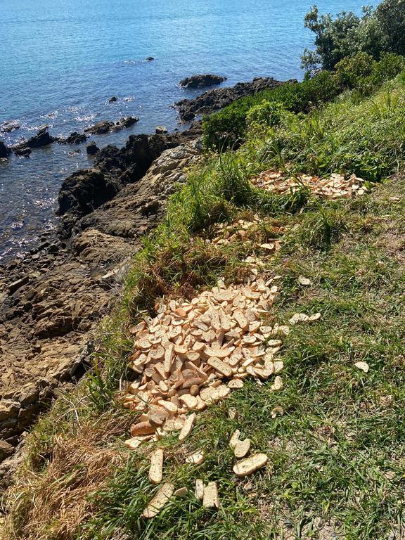 Bread dumped near trap sites in Wellington