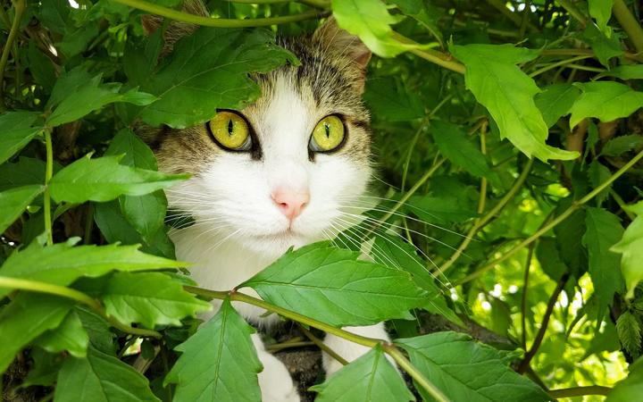 Cat hides in bush under the leaves