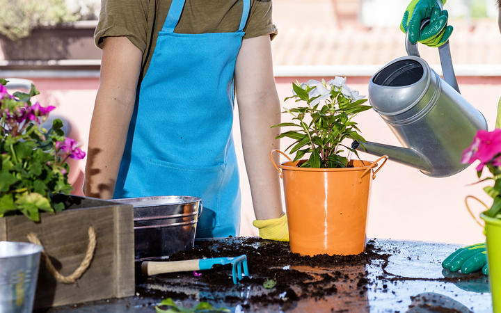 Teenagers wearing a gardener apron while gardening at terrace in a sunny day