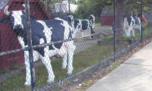Image result for halo farm and cows