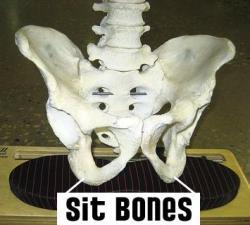 sit bones.WEB