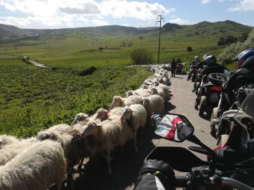 sardegna-gran-tour-moto-gregge-pecore