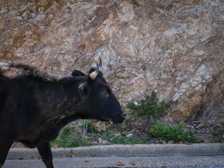 Corsica - road Calvi to Porto-Head of road maintenance team