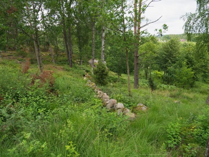 Tanum rock carvings - Sweden - Vitlyckehällen surrounding