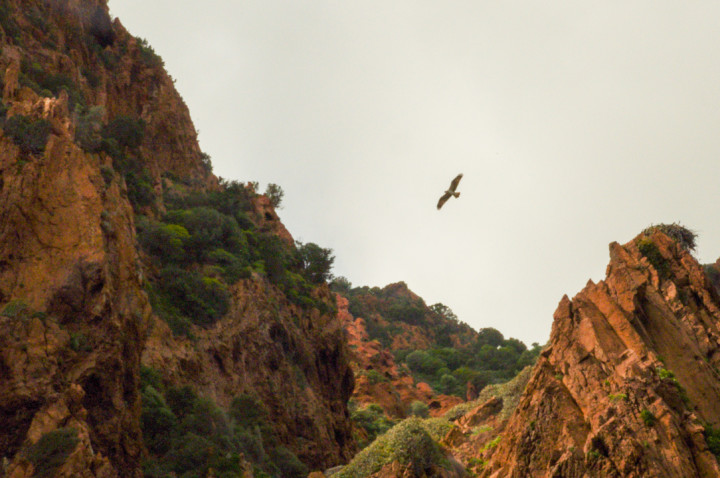 Scandola Nature Reserve in Corsica - great exceptional fauna