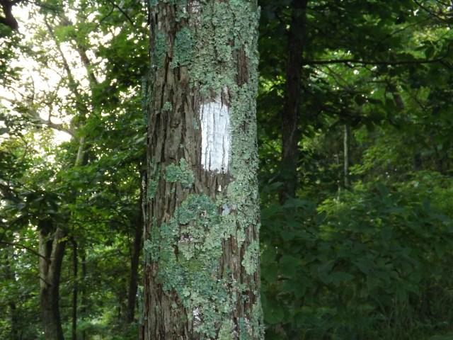 Shenandoah National Park: Appalachian Trail's White Blazes