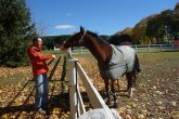 Saying hi to the horses