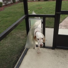 The dogs are used to the doggy doors - easy!