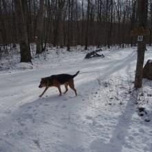 Snowy walk - Henry