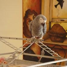 On my perch