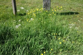Wildflowers near some paddocks