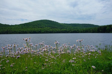 Flowers around Pelham Lake, MA