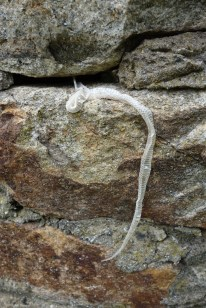A snake had shed its skin along the cracks of the tower