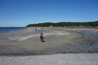 At low tide, the sandbar between Bar Harbor and Bar Island is exposed and you can walk across