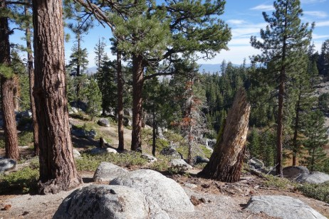 Our lunch spot near the Lake Tahoe Rim Trail - this is where we turned around